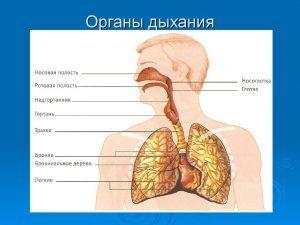 Очищение дыхательной системы в домашних условиях