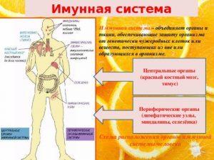 Очищение иммунной системы в домашних условиях