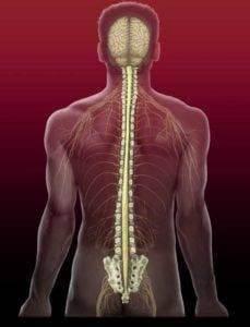 Поперечный миелит спинного мозга