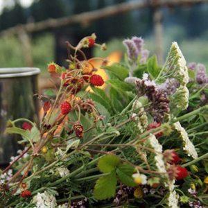 Травы при диабете для снижения сахара