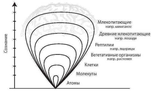 Сознание и комплексность. Триединый мозг