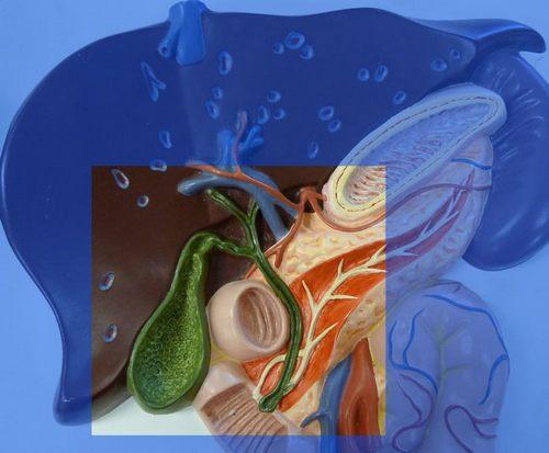 Дискинезия желчного пузыря лечение