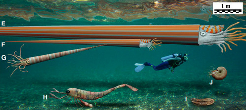 Палеозойские морские гиганты в сравнении с человеком