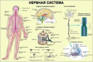 Нервы лечение успокоение