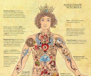 Сколько лет твоим внутренним органам