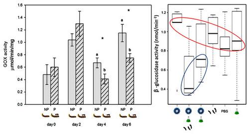 Рис. 2. Активность глюкозооксидазы (GOX) по скорости расщепления нитрофенол глюкозида