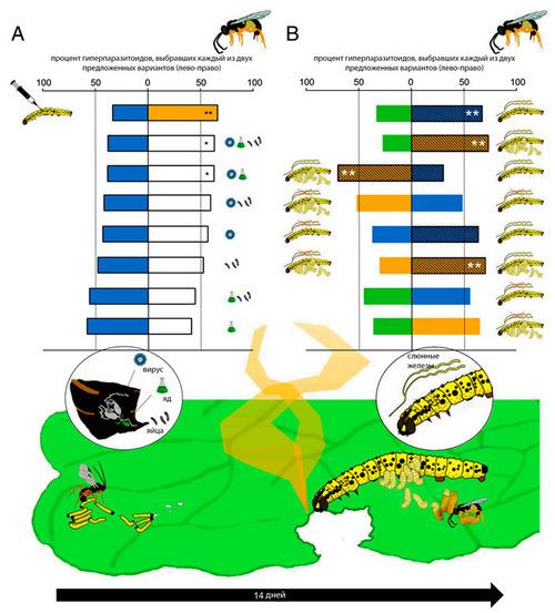 Рис. 4. Результаты тестов с выбором осой-гиперпаразитоидом запаха растения, на котором кормилась гусеница