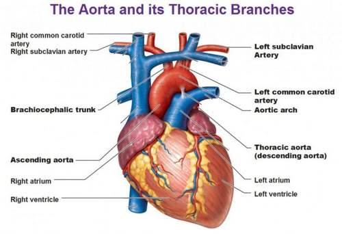 Лечение аортита
