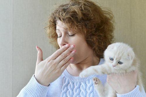 Как определить, аллергию на кошек