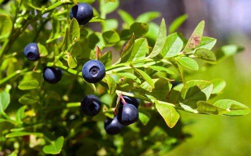 Ягоды и фрукты антиоксиданты, еда, здоровые, красота, молодость, полезные жиры