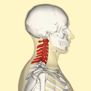 Симптомы и лечение шейного спондилеза