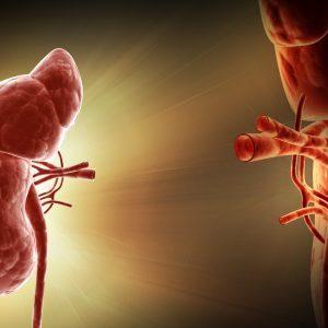 Трансплантация почки: в каких случаях, где, осложнения, прогноз, поведение после операции