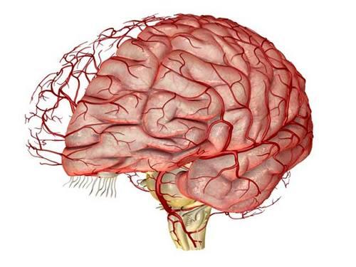 Очищение сосудов, головного мозга, улучшение памяти