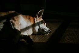 Полезен ли сон на полу, для спины