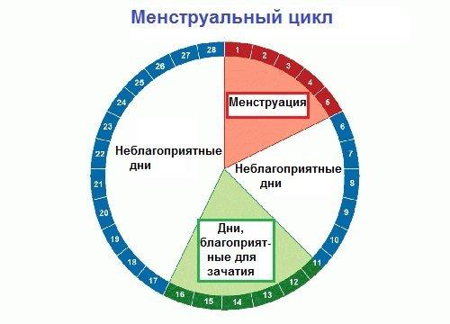 Как правильно, рассчитать менструальный цикл?