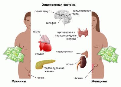 Что лечит врач эндокринолог